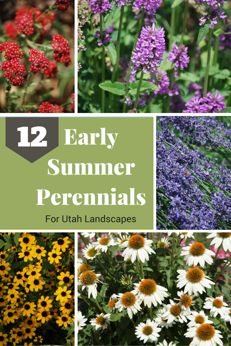 Early Summer Perennials For Utah